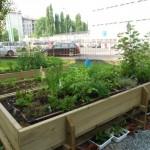 Botanic garden for kids